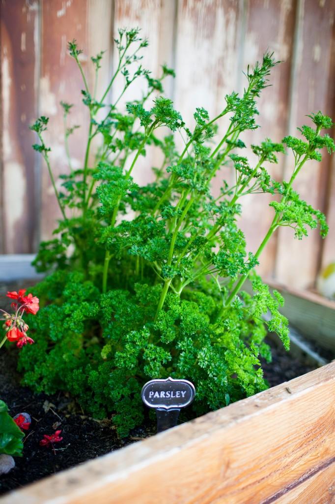 Gardening for the Black Thumb