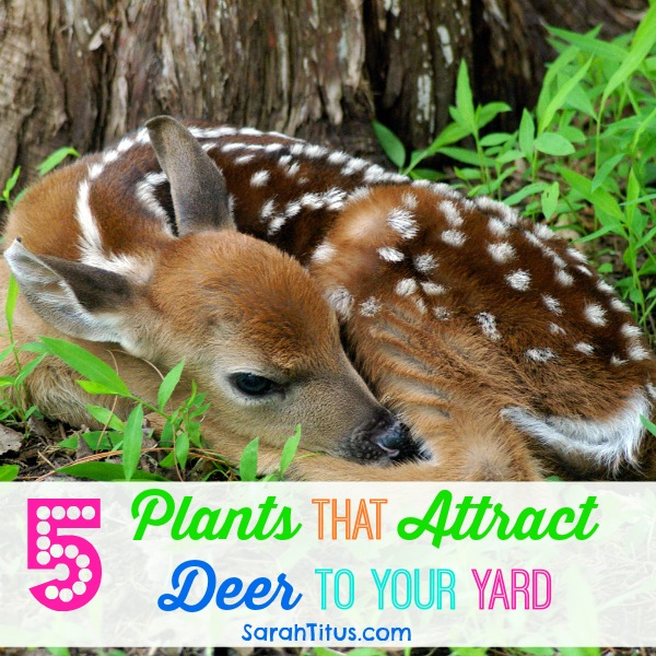 5 Plants That Attract Deer To Your Yard
